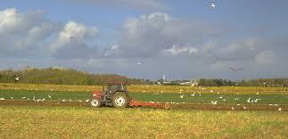 Agriculture sur Oléron