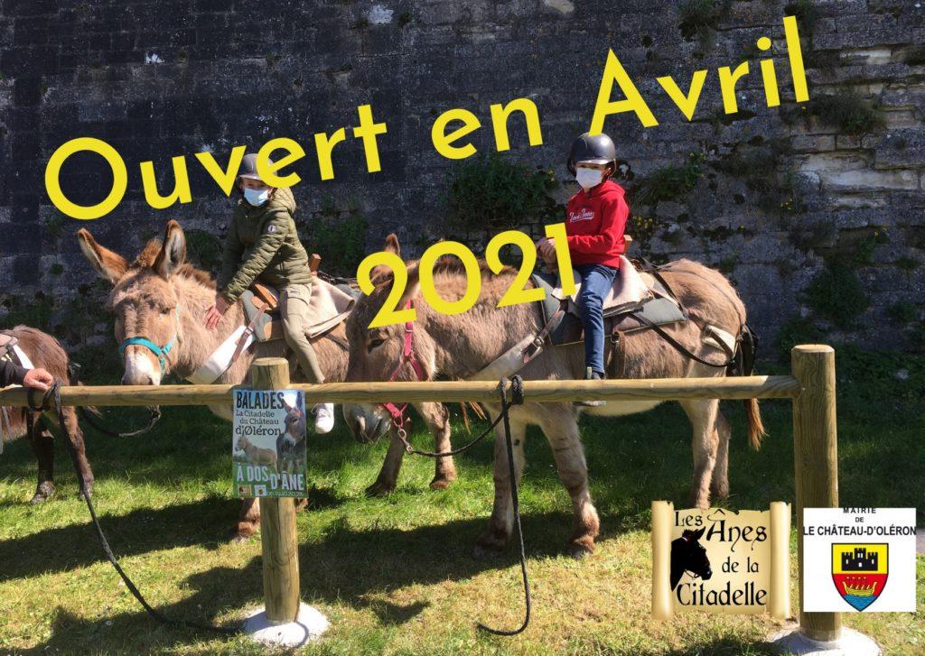 Les ânes de la Citadelle - Avril 2021